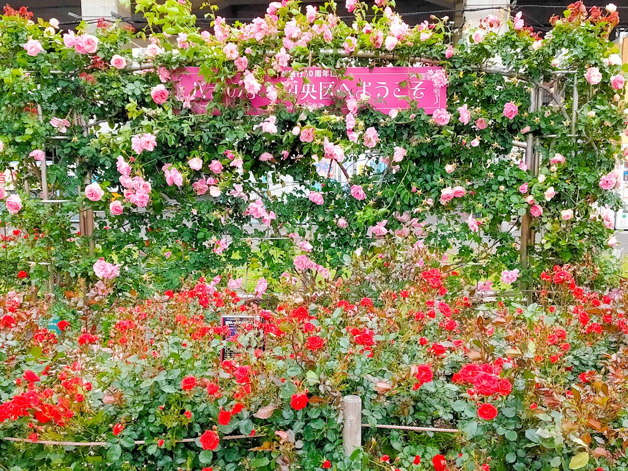 さいたま市中央区の区の花「バラ」が見頃