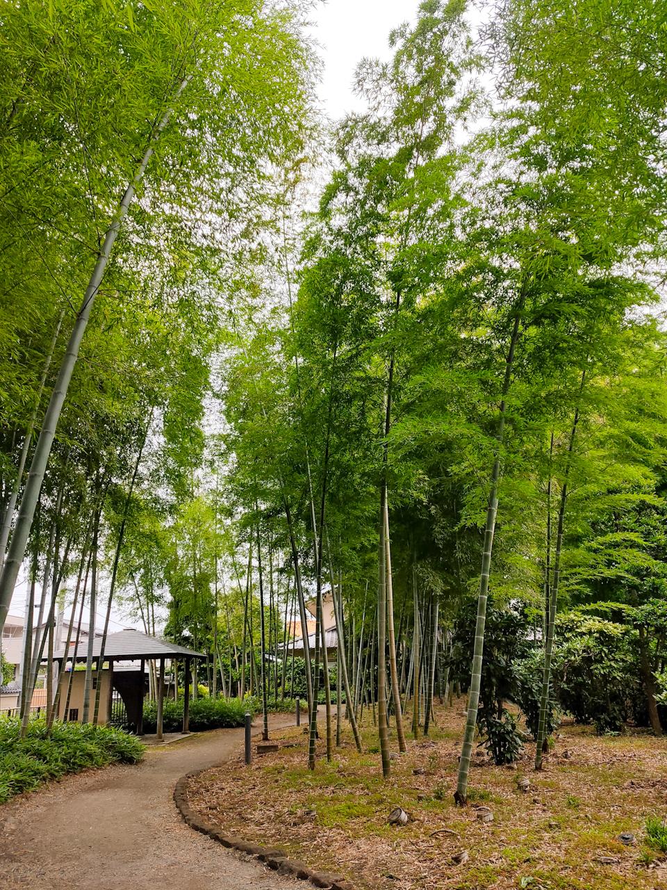 「氷川の杜文化館」の敷地内に広がる竹林