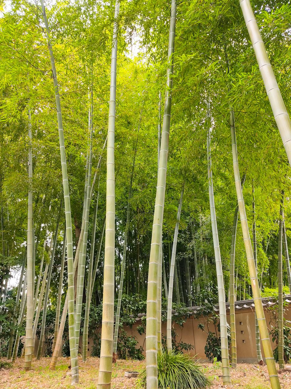 自然と心が安らいでくる竹林の姿