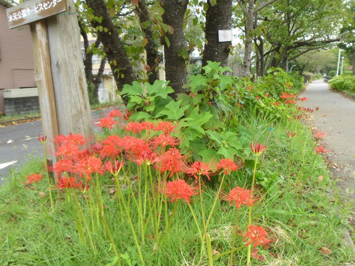 堤の緑に映える、赤い彼岸花