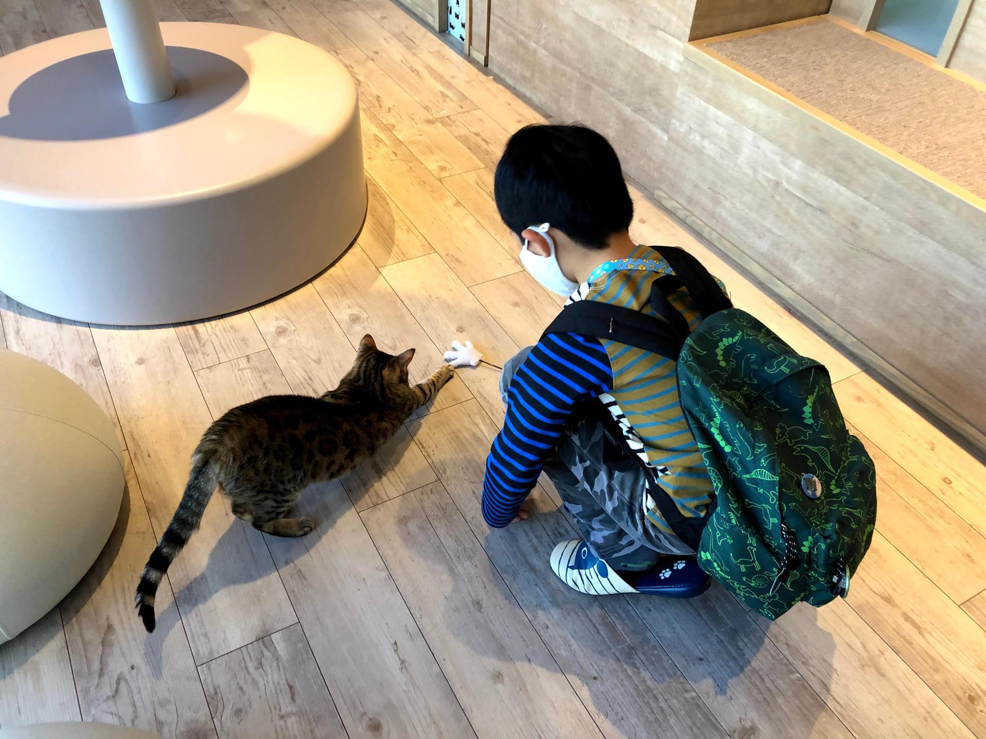 カワスイには空太郎が大好きな猫カフェがあるのである