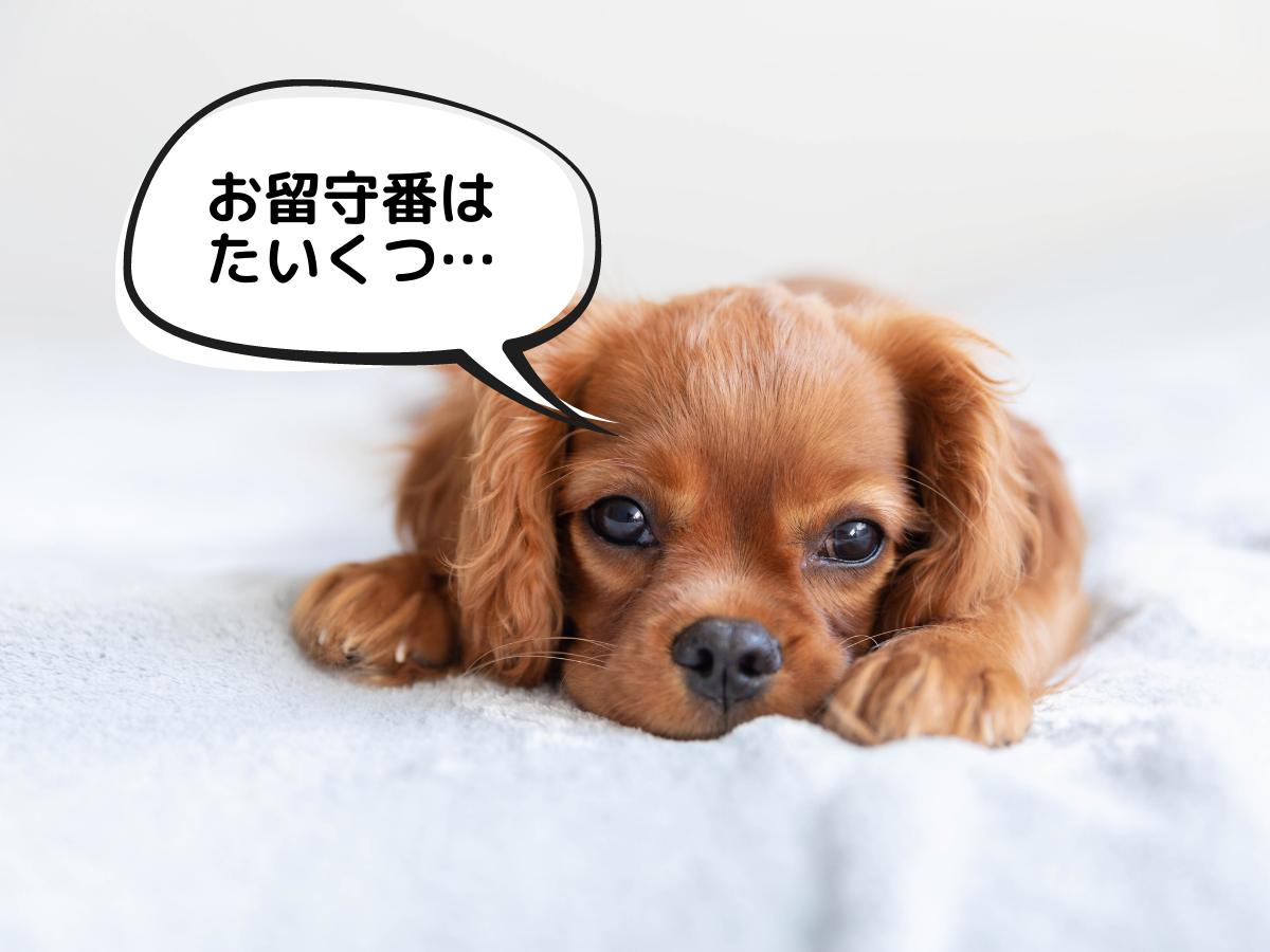 お留守番が長い子犬のトイトレはちょっと時間がかかるかも。