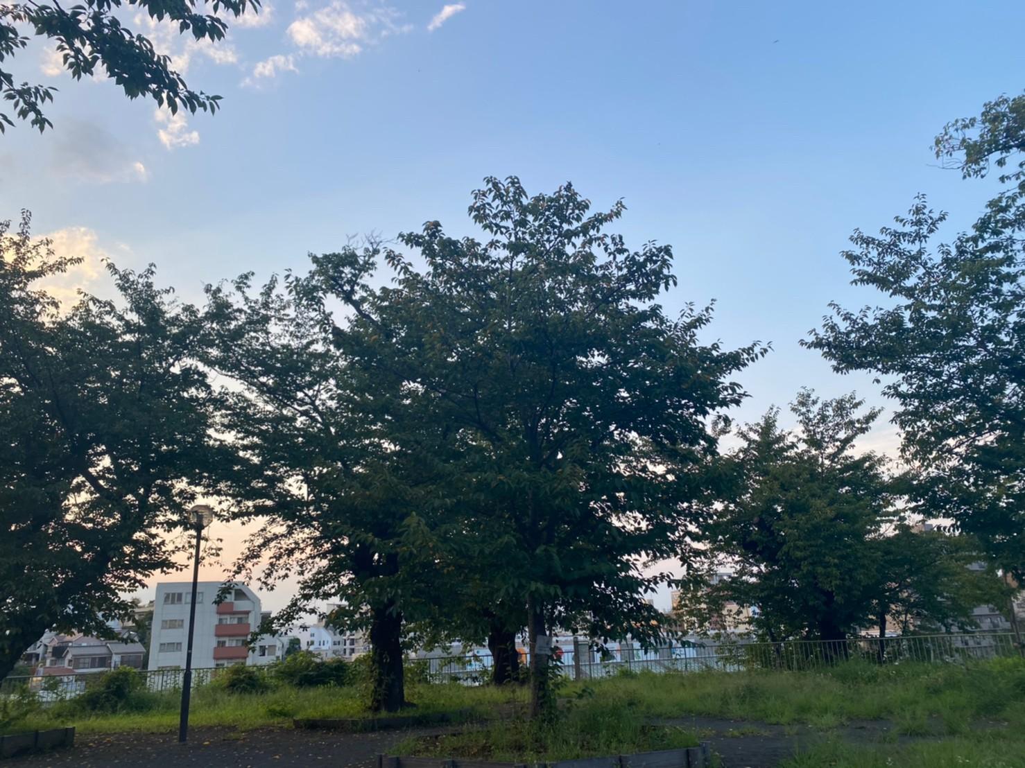 2021年9月15日撮影の幸ヶ谷公園