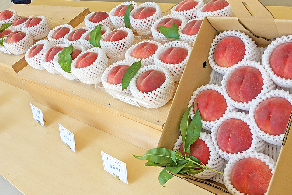 直売コーナーに並んだ桃。取材時の品種は「暁星(ぎょうせい)」。主力品種の「あかつき」の収穫もまもなく開始。
