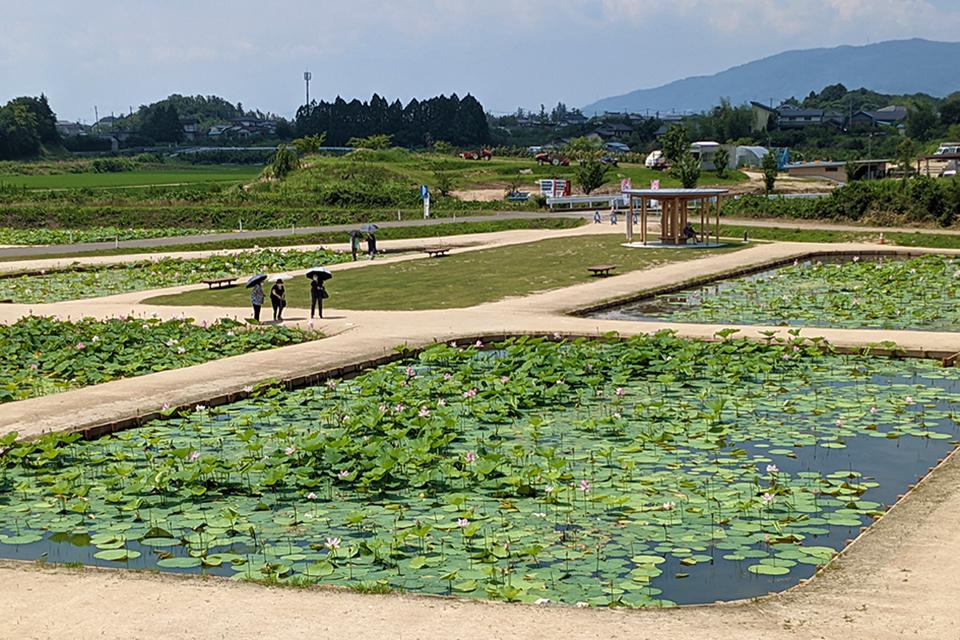 近隣の住民のお散歩スポットにもなっています。池の周辺にも東屋やベンチがありますよ。