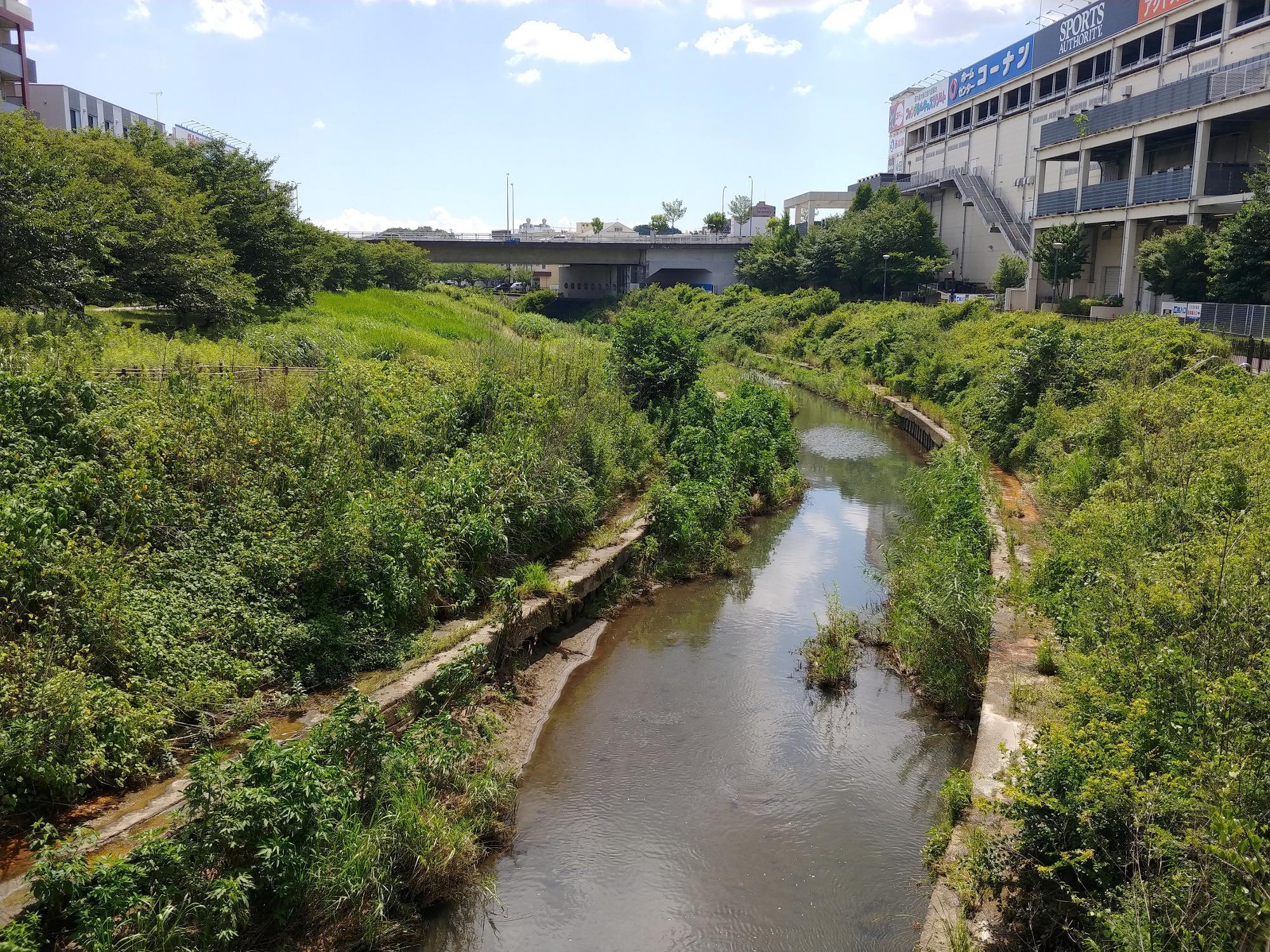 写真左側が早渕川親水広場。右側にはコーナン広報センター南店が見える。
