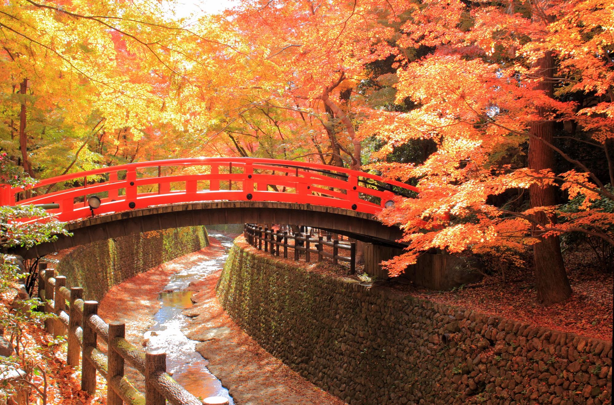 北野天満宮御土居の紅葉 京都ブライトンホテル提供