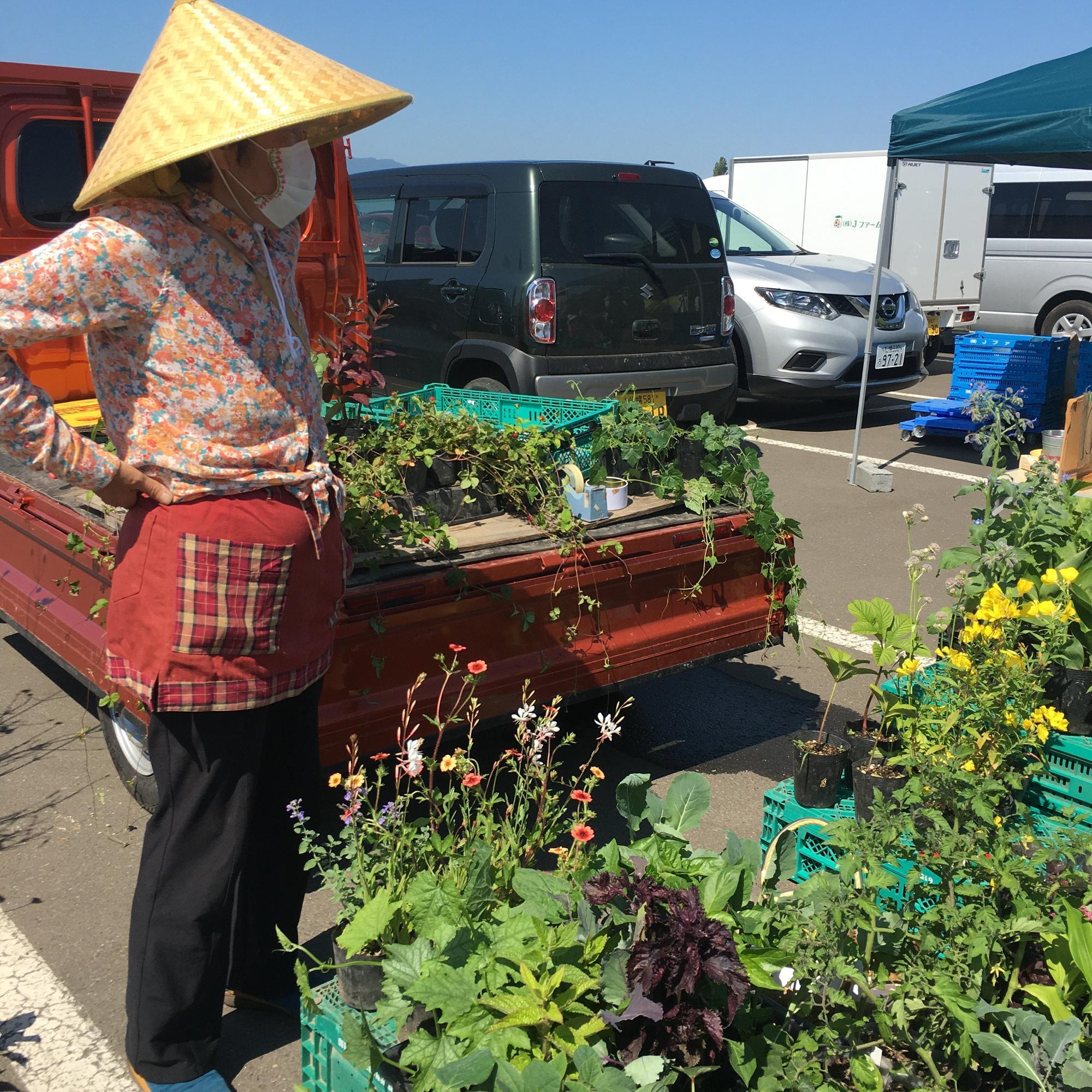 やさいの販売だけではなく、野菜の苗や庭の花の苗もあります。出店者の細貝さんはいつもマニアックな苗や、8月になると珍しい野菜を持って出店するので、ファンもとても多いのです