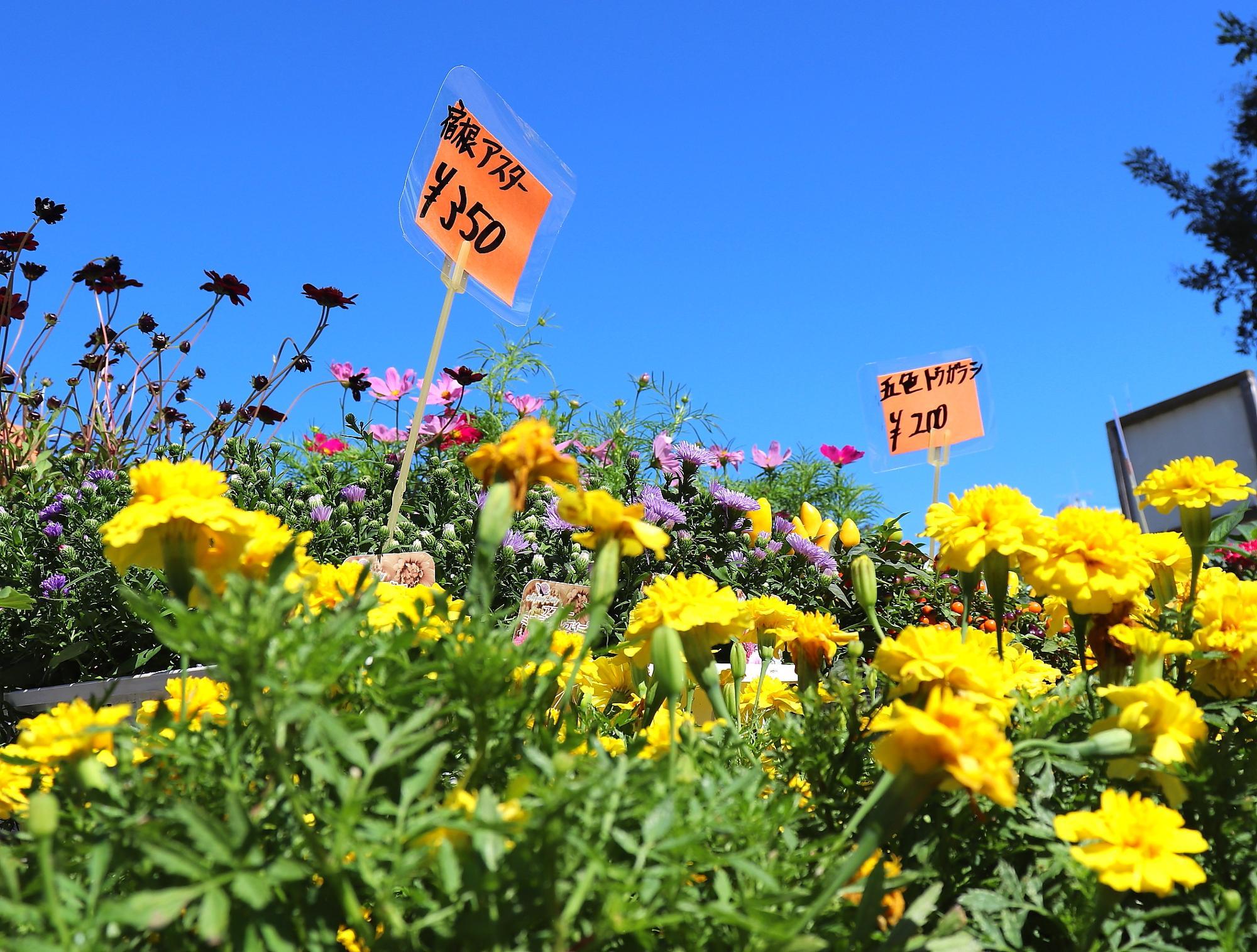 花の苗はとってもリーズナブルな価格で販売
