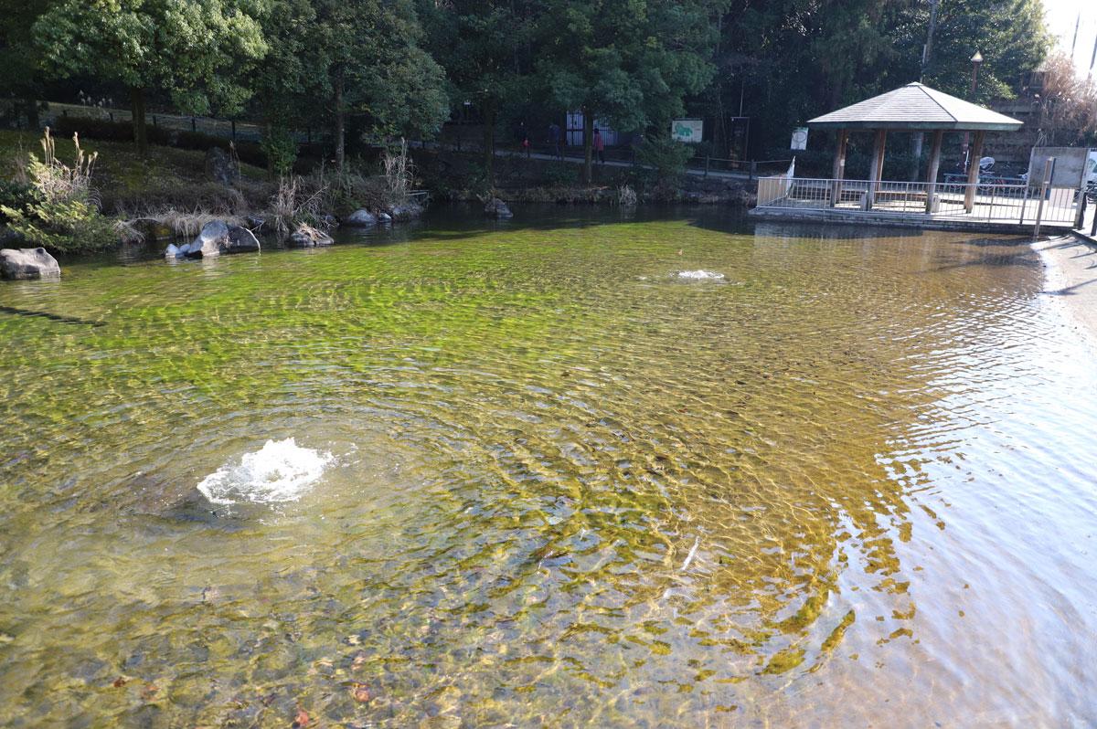 公園の入口には池があります