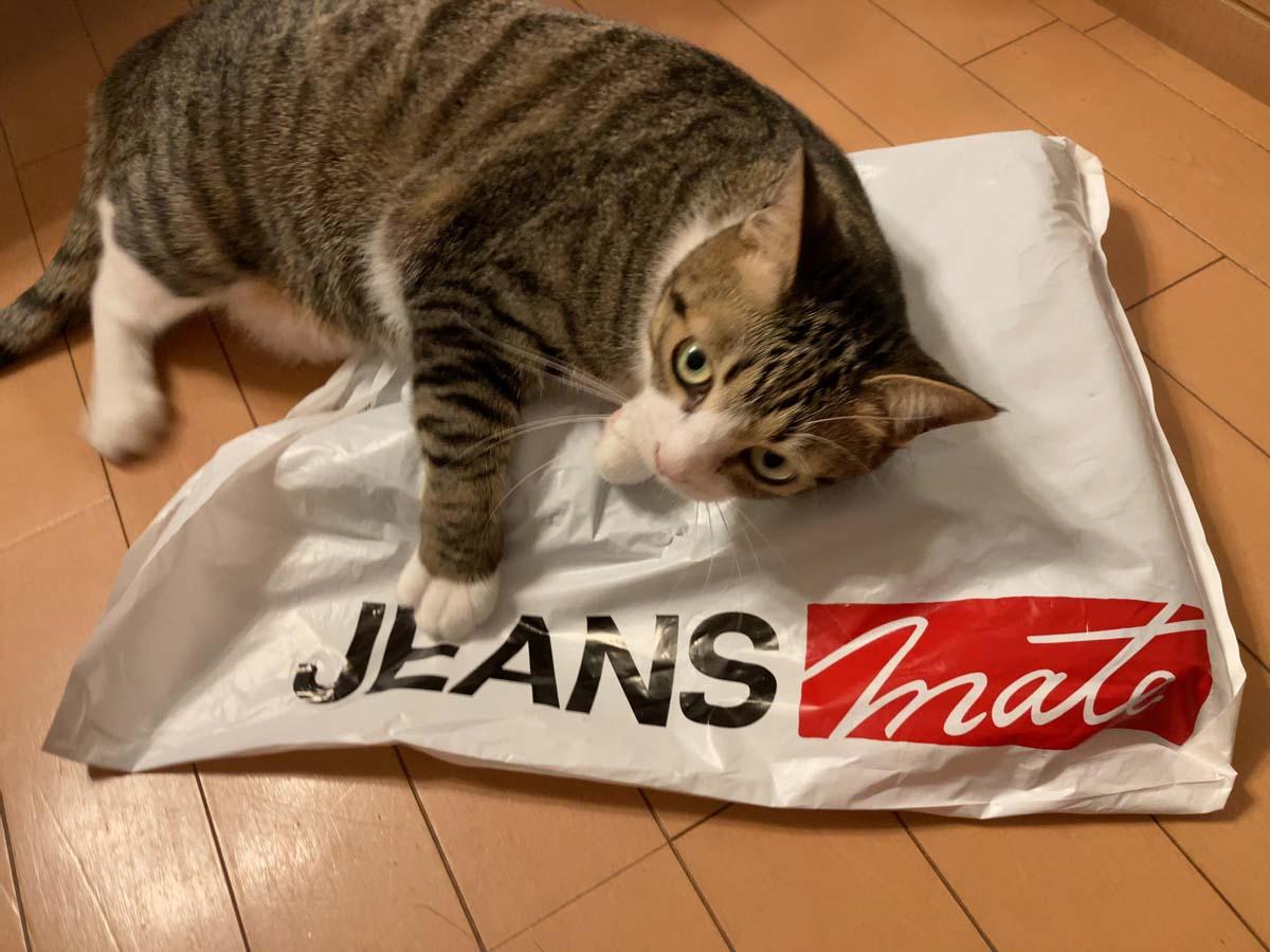 床に置いたら、猫がすぐに寄ってきました。猫もお気に入りのようです。