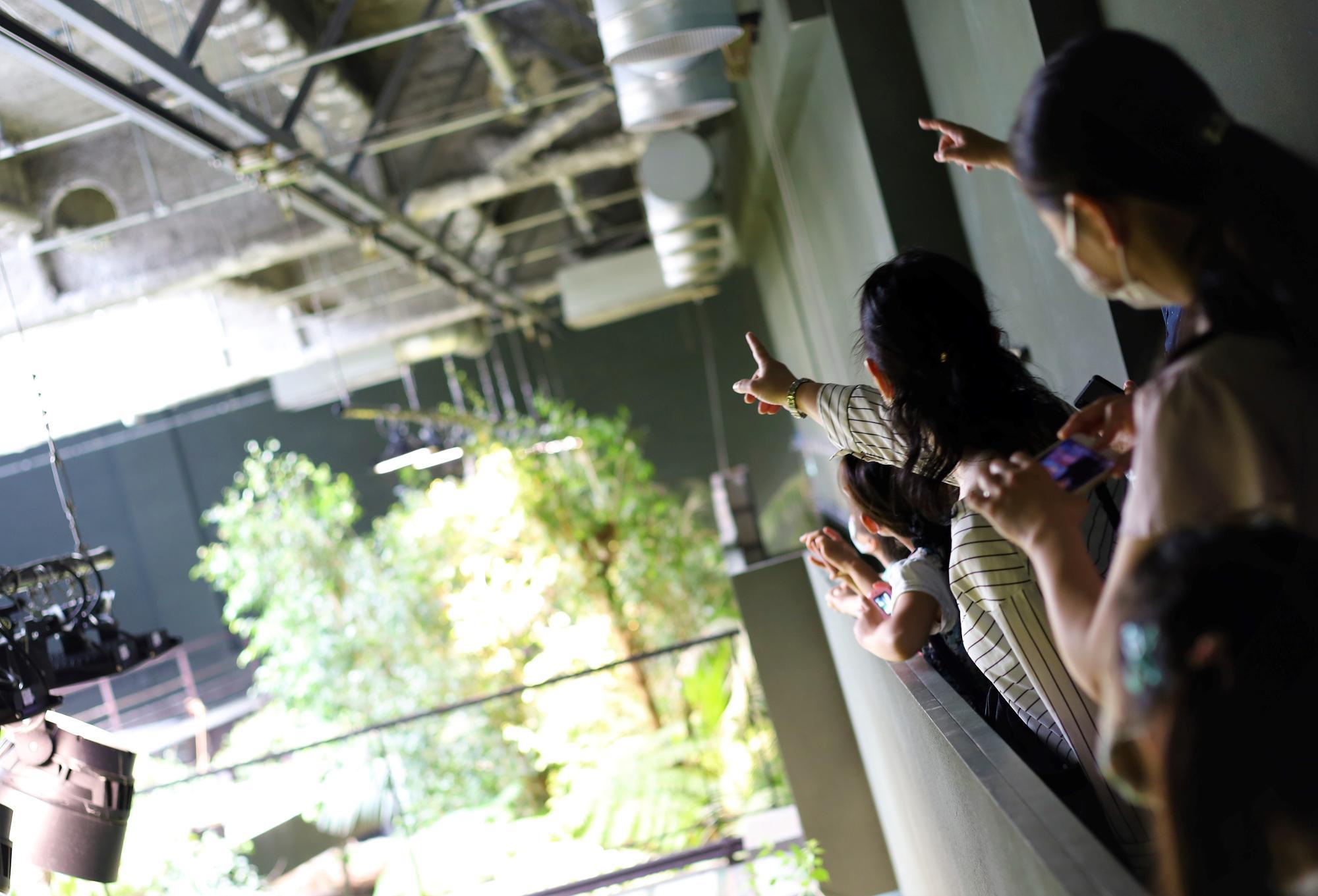 ジャングルを模した環境に実際に入って展示場の内側から生きものを観察。