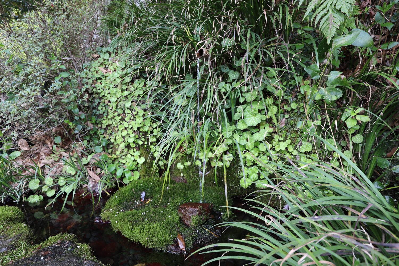 チョロチョロと流れてくる願い水