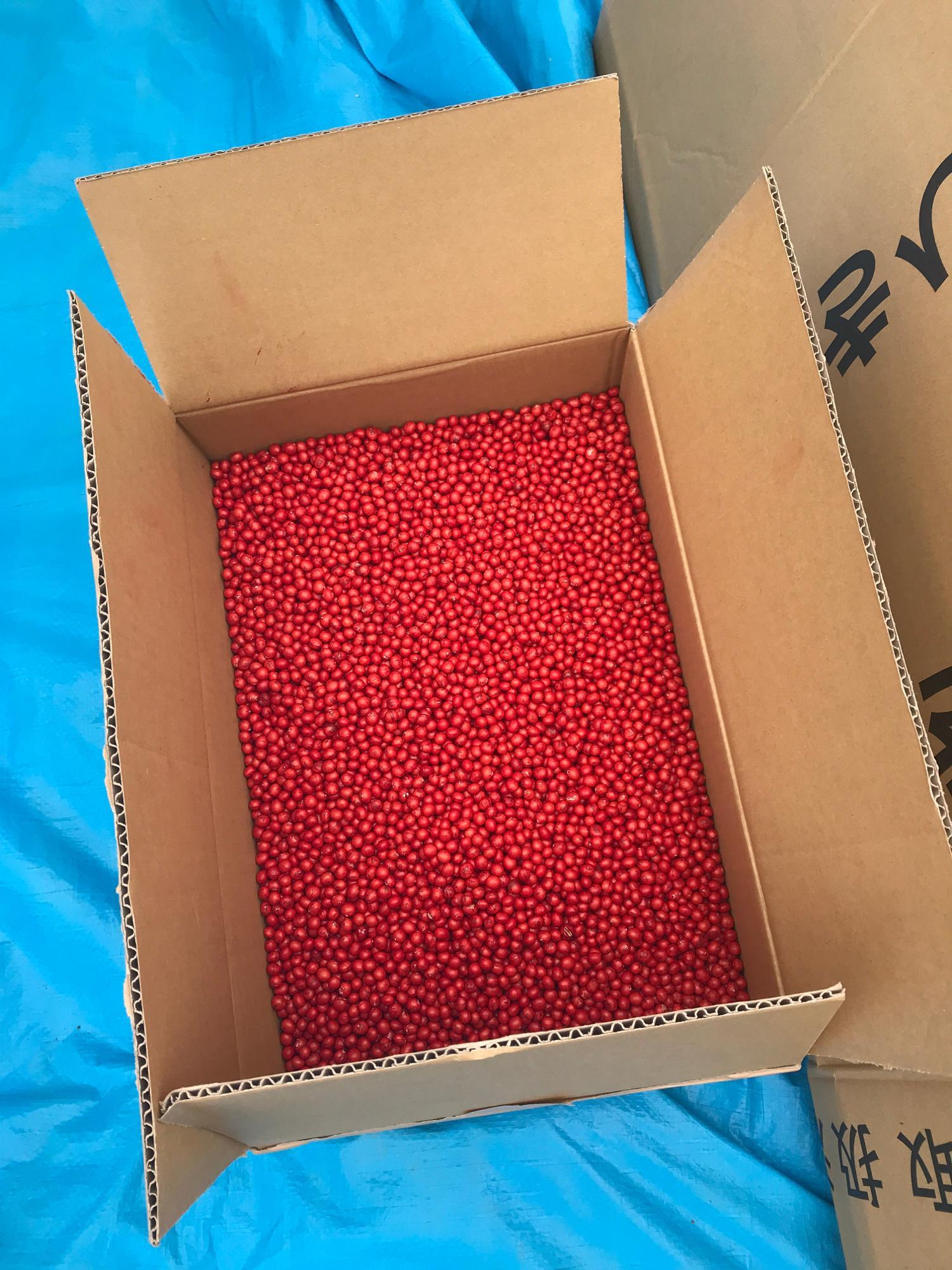 ダンボールいっぱいの津久井在来大豆。赤く着色しているのは外敵から守るため。