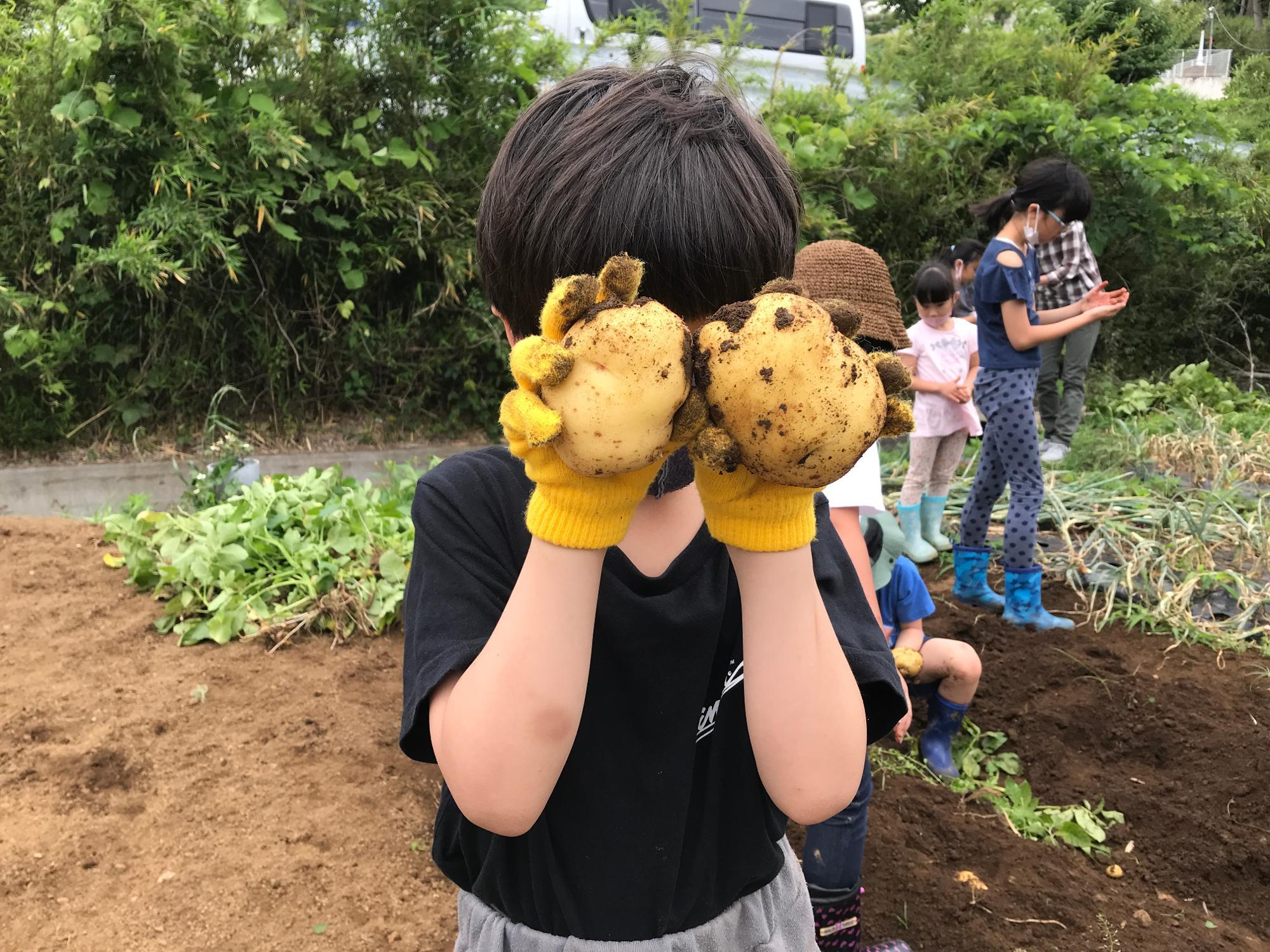 中にはこんなに立派なジャガイモも。収穫した品種は、ねっとりした食感のメークインと、ホクホク系のキタアカリだそうです。