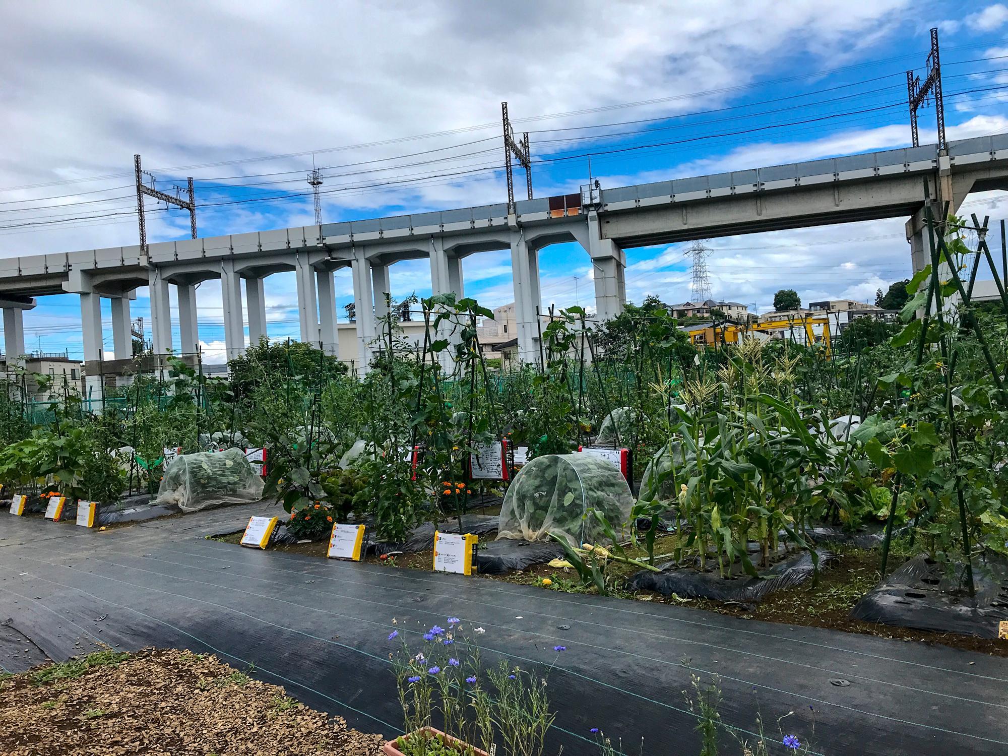 オーナーさんによって育てる野菜は様々。中にはお花を育てている区画もありました。