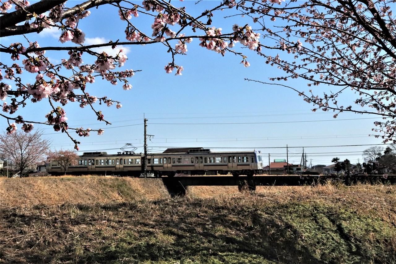 土手に桜の花咲く粕川橋梁をのんびりと渡る電車。元京王井の頭線で走っていた中古車だ。