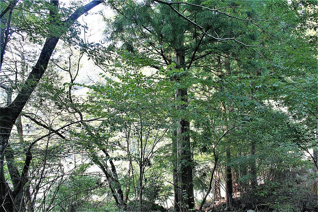 うっそうとした森の中、聞こえるのは虫の声と川の流れの音だけだった。